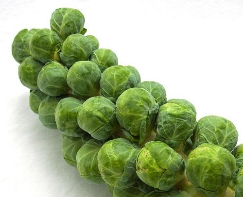 Bắp cải Bruxen có tác dụng rút ngắn triệu chứng cảm lạnh