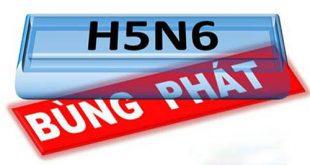 Phú Yên ghi nhận xuất hiện ổ dịch bệnh cúm A H5N6