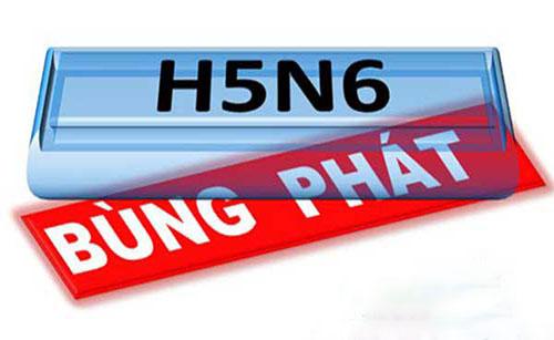 Bùng phát dịch H5N6 tại Phú Yên