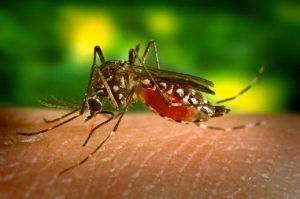 Muỗi - tác nhân gây bệnh truyền nhiễm