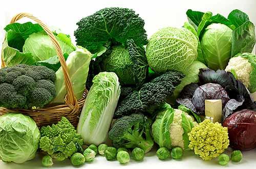 Rau xanh rất tốt cho sức khỏe