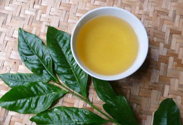Lá trà xanh có rất nhiều công dụng đối với sức khỏe và lầm đẹp