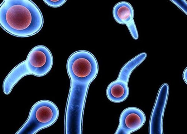 Vi khuẩn uốn ván